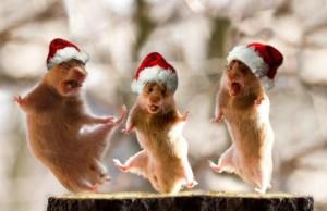 myszy tańczą